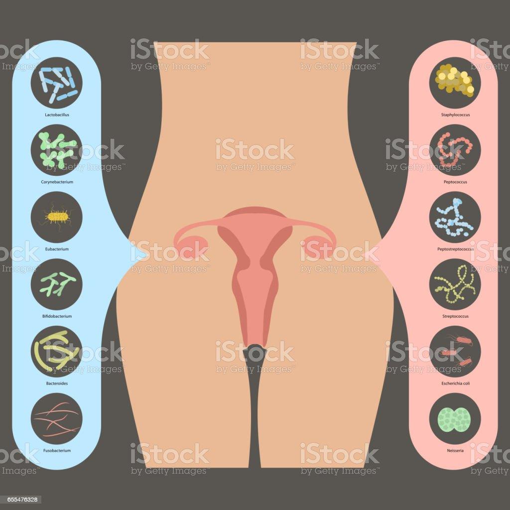 Gynecology Vector illustration vector art illustration