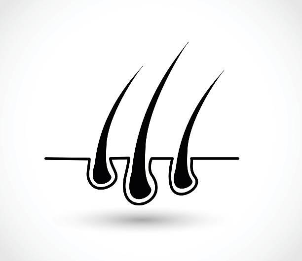 hair follicle diagram clip art royalty free hair follicle clip art, vector images ... christmas clip art venn diagram #6