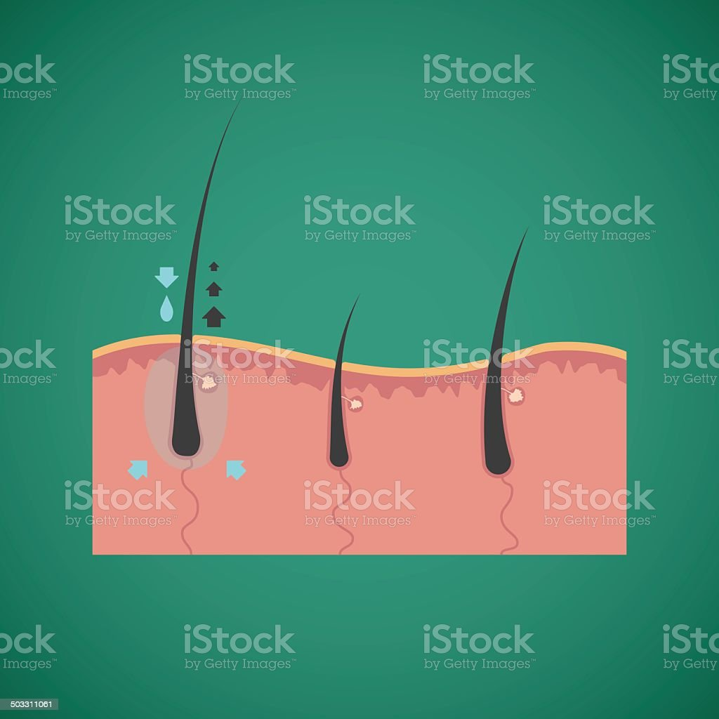 Hair care and growth nutrients vector concept vector art illustration