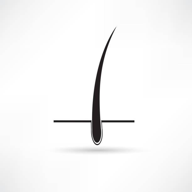 fuse box diagram clip art royalty free hair follicle clip art, vector images ... hair follicle diagram clip art