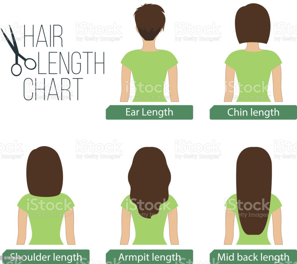 Hair length chart back view vector art illustration