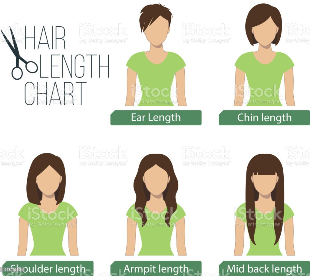 Hair length chart front view vector art illustration