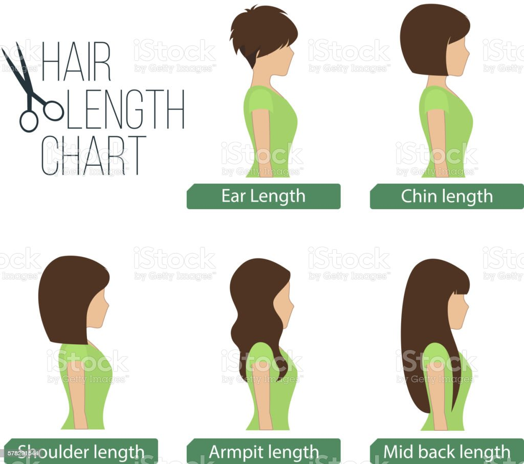 Hair length chart side view vector art illustration