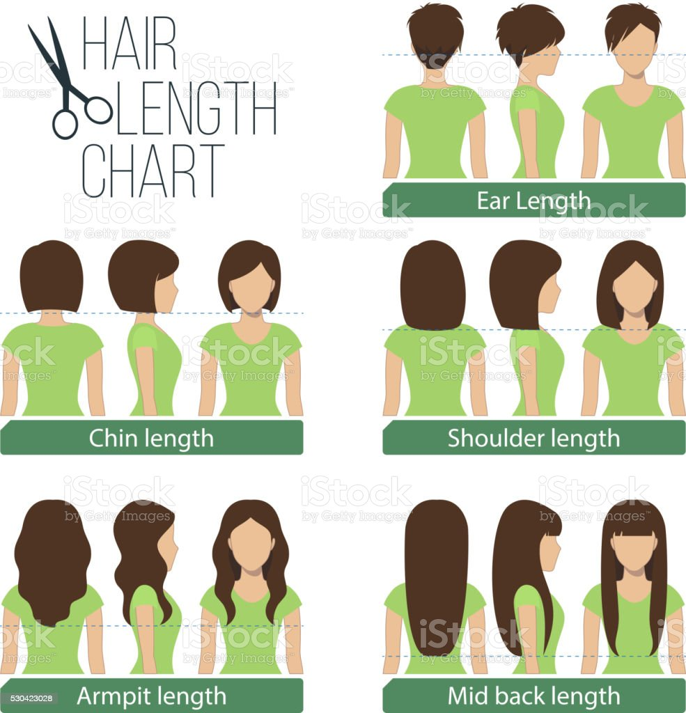 Hair length chart vector art illustration