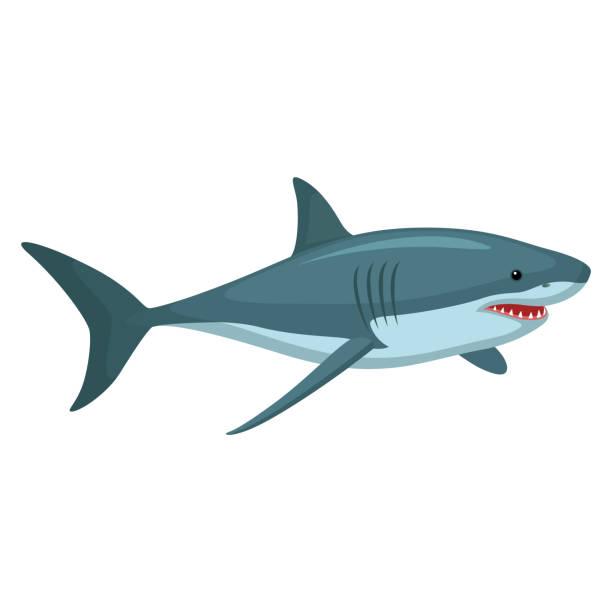 Haj Illustrationen visar en haj animal fin stock illustrations