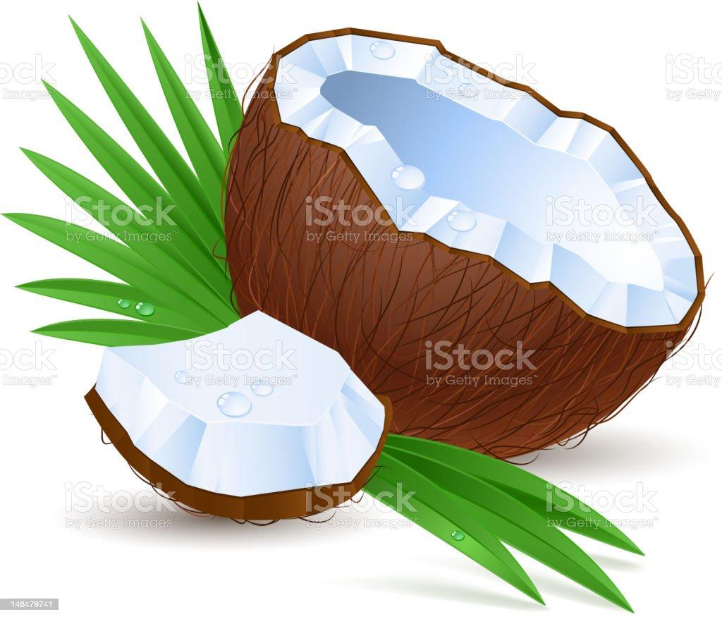 Half a coconut vector art illustration