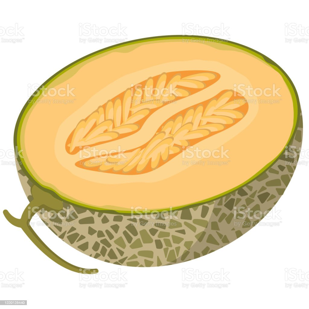 Half Melon In Cartoon Style Stock Illustration Download Image Now Istock Check out inspiring examples of cantaloupe artwork on deviantart, and get inspired by our community of talented artists. half melon in cartoon style stock illustration download image now istock