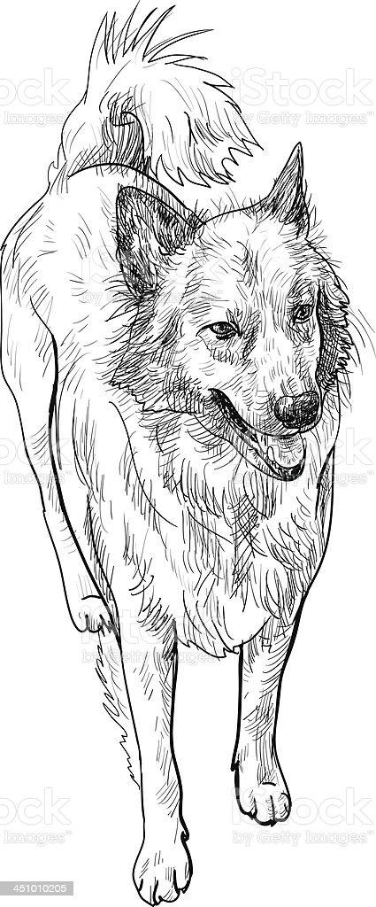 Half-breed dog vector art illustration