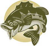 cartoon illustration of a bass in halftone pattern style