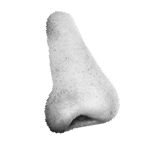 Halbton Menschliche Nase isoliert auf weißem Hintergrund. Seitenansicht – Vektorgrafik