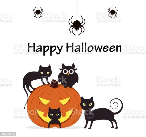 Halloween background pumpkin with cats owl and spiders vector id853196444?b=1&k=6&m=853196444&s=612x612&h=mbovm9smgsc2ffx6kl9wt59svu8o331e8qsicfc44fs=