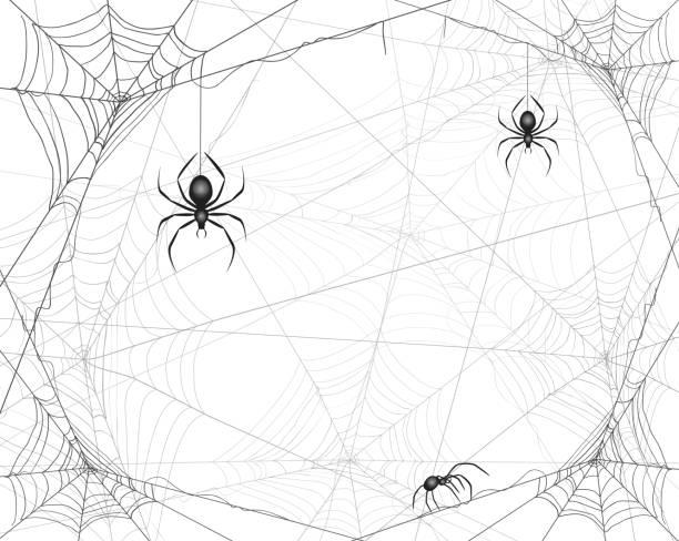 bildbanksillustrationer, clip art samt tecknat material och ikoner med halloween bakgrund med spindlar och spindelnät - halloween background