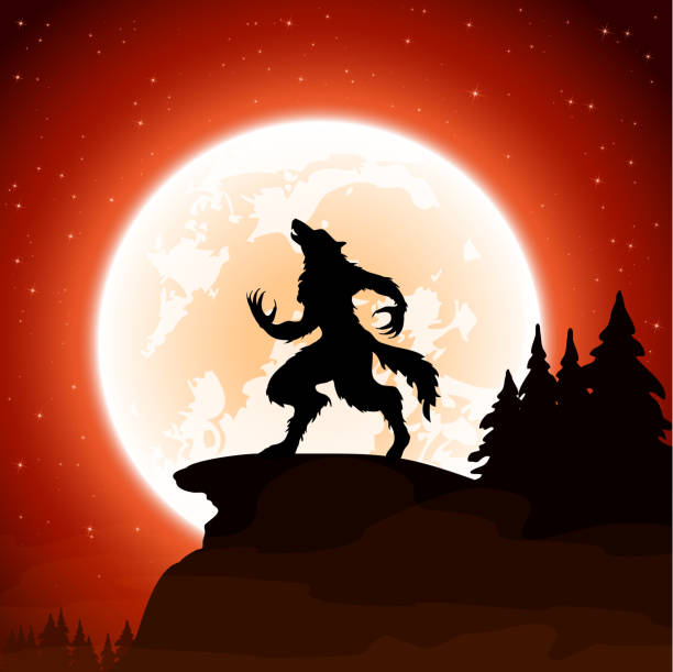 Halloween background with werewolf Halloween night and werewolf on Moon background, illustration. werewolf stock illustrations