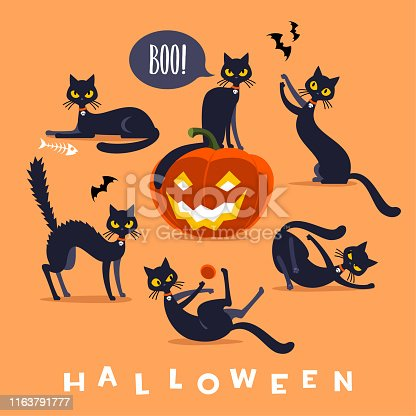 Funny Halloween black cat isolated in different poses.