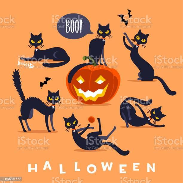 Halloween black cat character vector id1163791777?b=1&k=6&m=1163791777&s=612x612&h=if1w0jzzg0yd6a emotk61xmtfpqgwvvoqm4gpimypw=