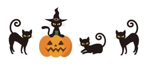 halloween black cat illustration vector