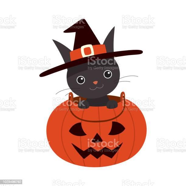 Halloween black cat in pumpkin basket vector id1023496762?b=1&k=6&m=1023496762&s=612x612&h=vl364icwx  32d axijtgjhobzx7tatz6m37mzhlila=