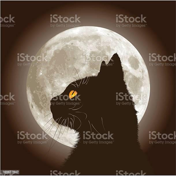 Halloween black cat vector id165677842?b=1&k=6&m=165677842&s=612x612&h=7tpegojmja96sjxkqy7zkxlxzydw1blcxhhs3b9fs6s=
