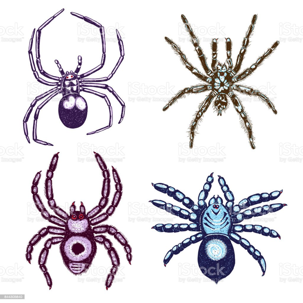 halloween colour spiders stipple drawing set isolated insects spider collection in trendy embroidery stippling and - Pictures Of Spiders To Colour In