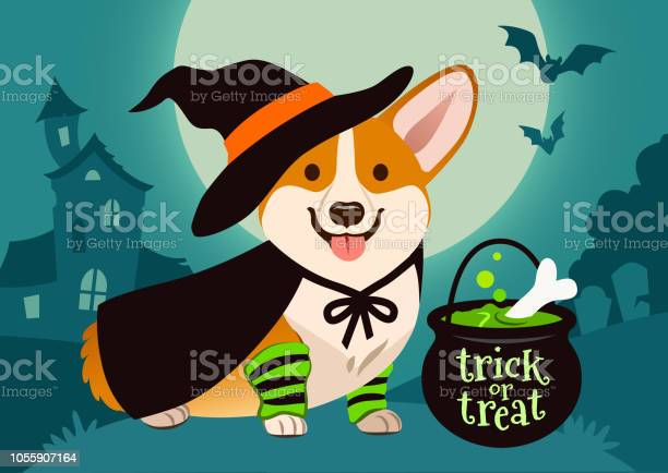 Halloween cute smiling welsh corgi dog in witch costume black hat and vector id1055907164?b=1&k=6&m=1055907164&s=612x612&h=9niehruw0dkcej4fdrsxwszrsaaviwywqbdxuh0dele=