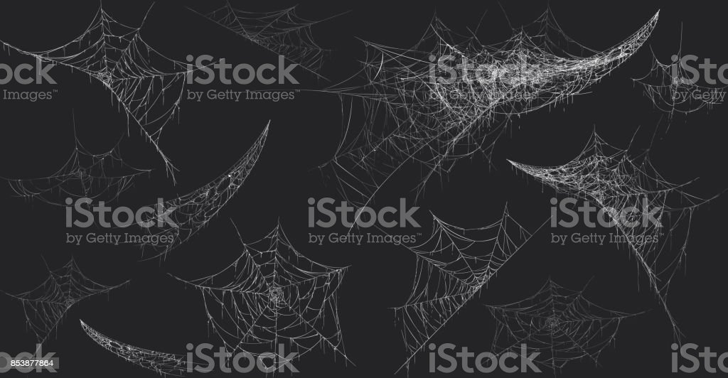 Halloween decor, spider cobweb, hand drawn vector illustration. vector art illustration