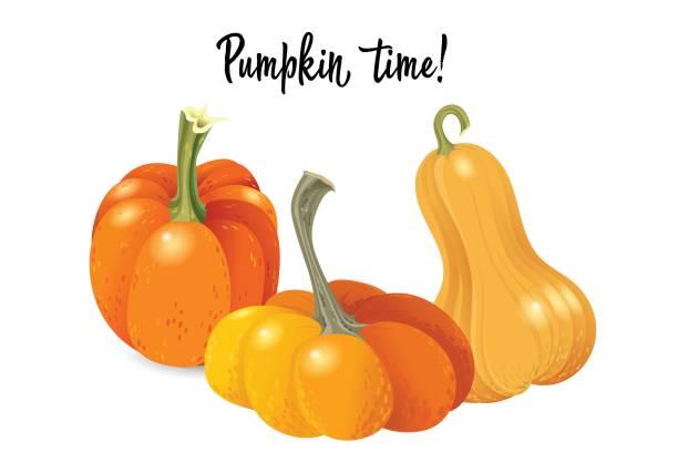 halloween kürbis legen. verschiedene formen und größen orange kürbis isoliert auf weißem hintergrund. vektor-illustration. - flaschenkürbis stock-grafiken, -clipart, -cartoons und -symbole