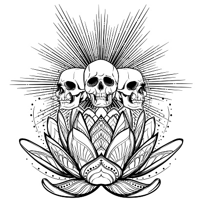 Halloween spirit. Human skulls on a sacred lotus flower with light rays behind. Intricate hand drawing isolated on white background. Tattoo design.