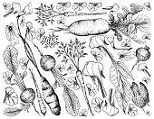 ハンブルク、パセリ、ヤーコン、わさび、カマス、広葉樹の矢印、野菜、食品、葉、ニンニク、ベジタリアン、生のハーブ、スパイス、ガーニッシュ、料理、有機、調味料、グルメ、成分、植物、塊根、塊茎、日本語、西洋わさび、