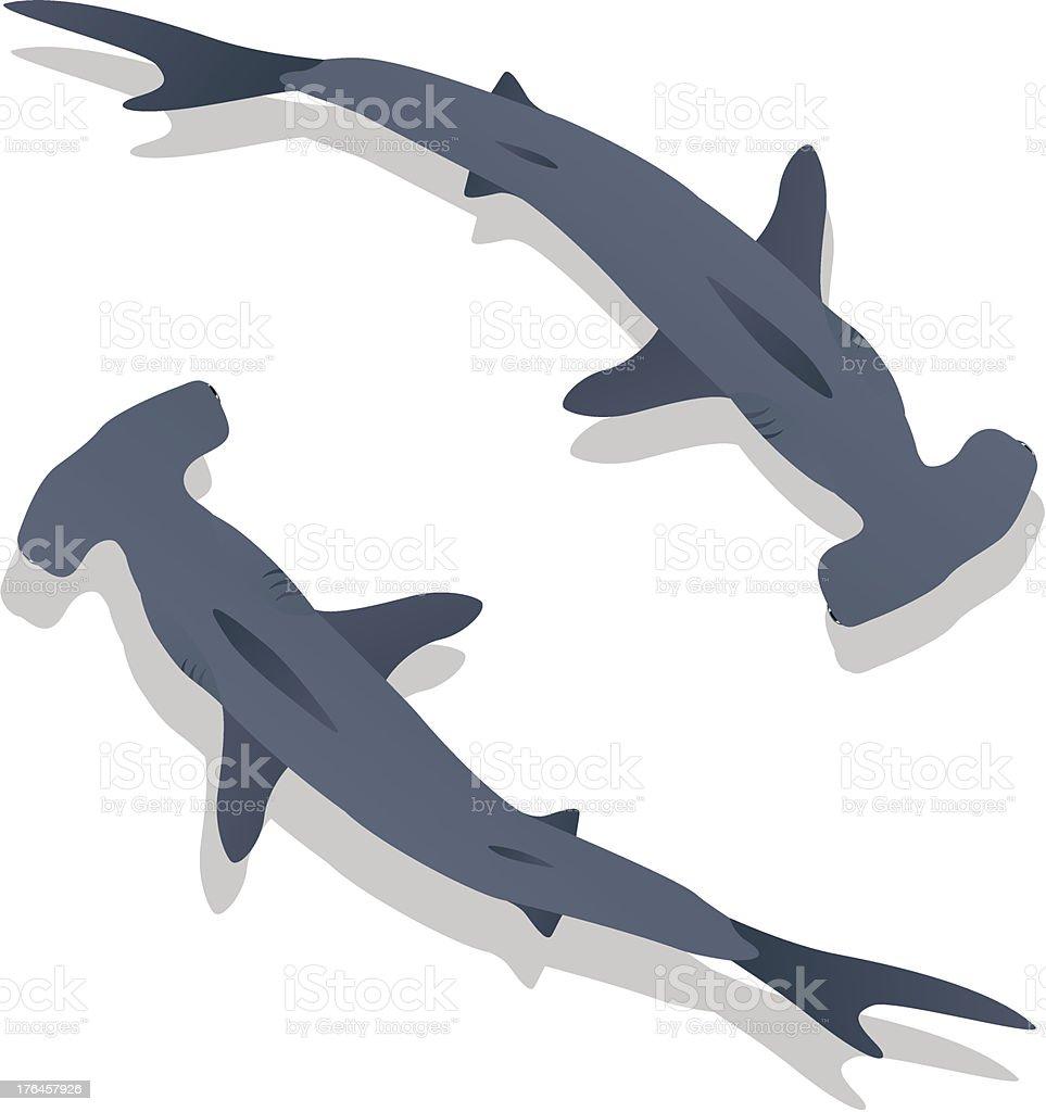 ハンマーサメ - イラストレーションのベクターアート素材や画像を多数ご