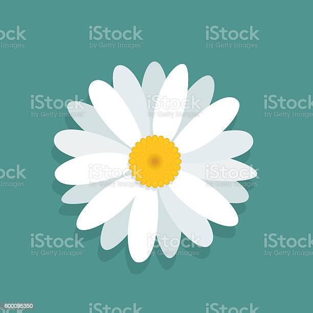 Hamomile flower isolated on blue background vector id600095350?b=1&k=6&m=600095350&s=612x612&h=umor2exyrn4xo ihrn2wuoax1vzticzk8nloteenzw4=