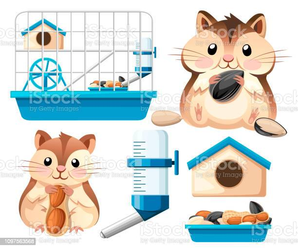 Hamster icon collection cute hamster sit and holding a sunflower seed vector id1097563568?b=1&k=6&m=1097563568&s=612x612&h=nq duq9neiybrpgy6sk6t ljdi oq9yjns 8lfyjgoy=