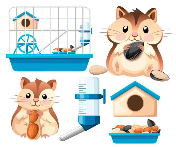 hamster-icon-sammlung. niedliche hamster sitzen und halten eine sonnenblumenkerne und mutter. hamsterkäfig, rad und automatische trinker. cartoon-charakter-design. flache vektor-illustration auf weißem hintergrund - hamsterhaus stock-grafiken, -clipart, -cartoons und -symbole