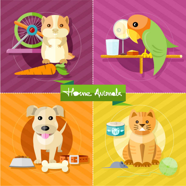 hamster, parrot, katze und hund - hamsterhaus stock-grafiken, -clipart, -cartoons und -symbole