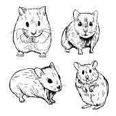 Hamster. Vector   illustration.