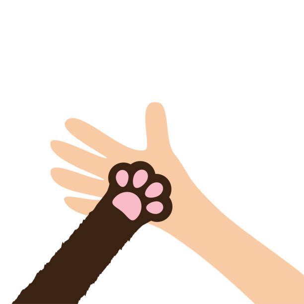 Hand arm holding cat dog paw print leg foot. Help adopt animal pet donate concept. Close up. Friends forever. Veterinarian care. Veterinary vet doctor. Flat. White background. Isolated. Hand arm holding cat dog paw print leg foot. Help adopt animal pet donate concept. Close up Friends forever. Veterinarian care. Veterinary vet doctor Flat White background Isolated Vector illustration paw stock illustrations