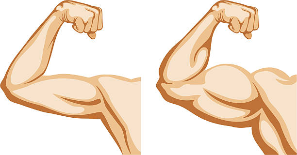 Hand Before and After fitness Before and After. Two hands shows progress after fitness. human muscle stock illustrations