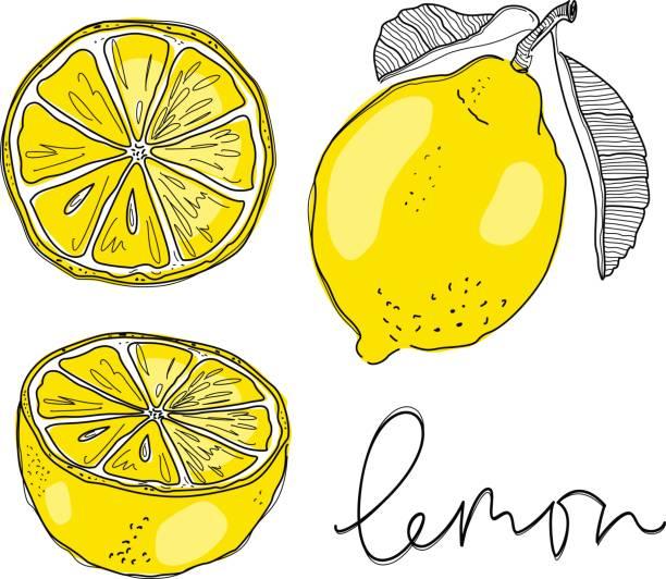 Hand draw of lemon. Vector illustration. vector art illustration