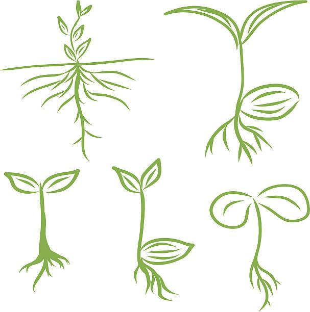 stockillustraties, clipart, cartoons en iconen met hand draw sprouts plants seeding. vector  illustrations eps10 - spruitjes