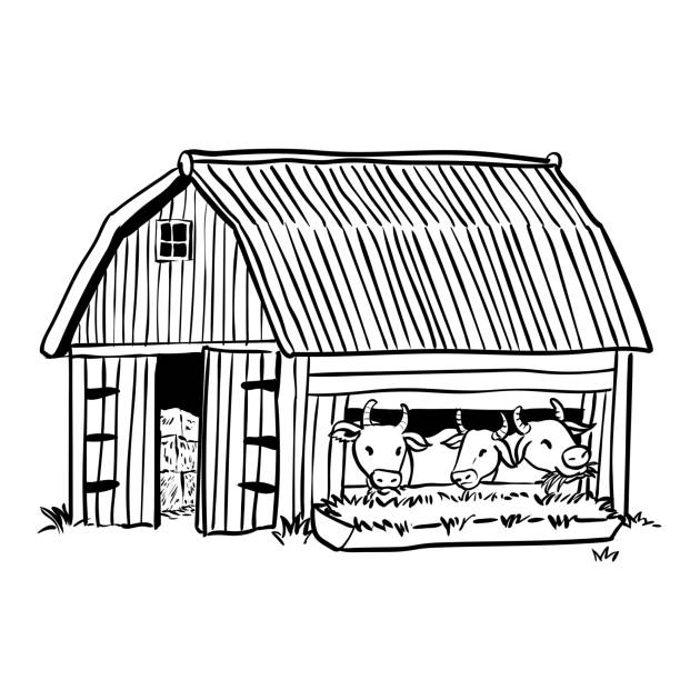 Hand Drawing Barn With Three Cows Vector Illustration Art