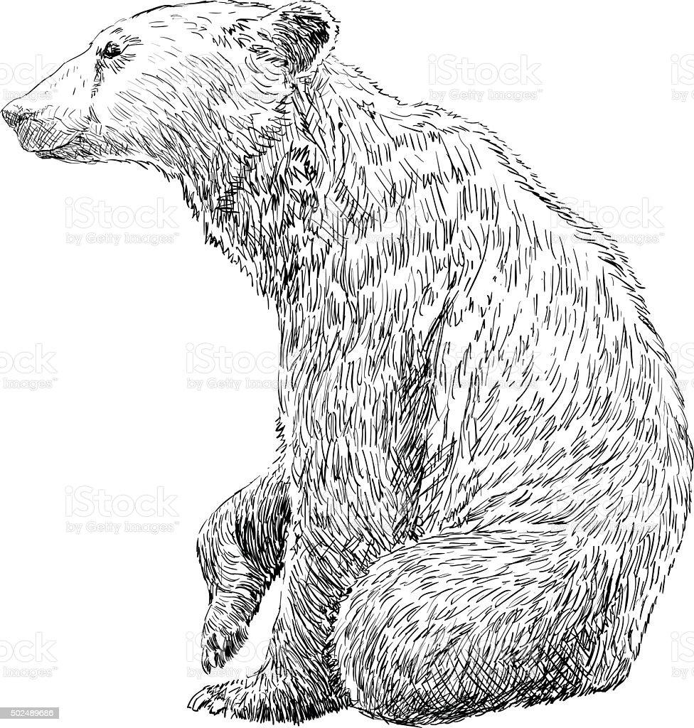 Hand Drawing Bear vector art illustration