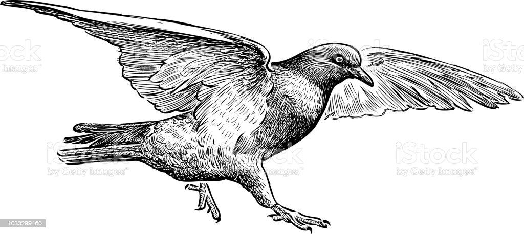 Main Dessin Dun Pigeon Volant Vecteurs Libres De Droits Et Plus D