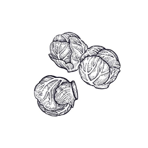 stockillustraties, clipart, cartoons en iconen met hand tekening van plantaardige spruiten. - spruitjes