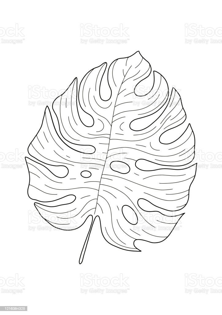 Hand Drawing Silhouette Of Tropical Leaf Monstera Deliciosa Isolated On White Background Suitable For Wall Decoration Logo Package Stock Illustration Download Image Now Istock Tropical leaf of monstera, watercolor painting. hand drawing silhouette of tropical leaf monstera deliciosa isolated on white background suitable for wall decoration logo package stock illustration download image now istock