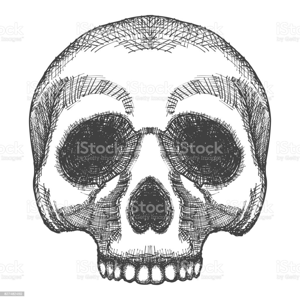 hand drawing skull human skull sketch black and white illustration of skull hand