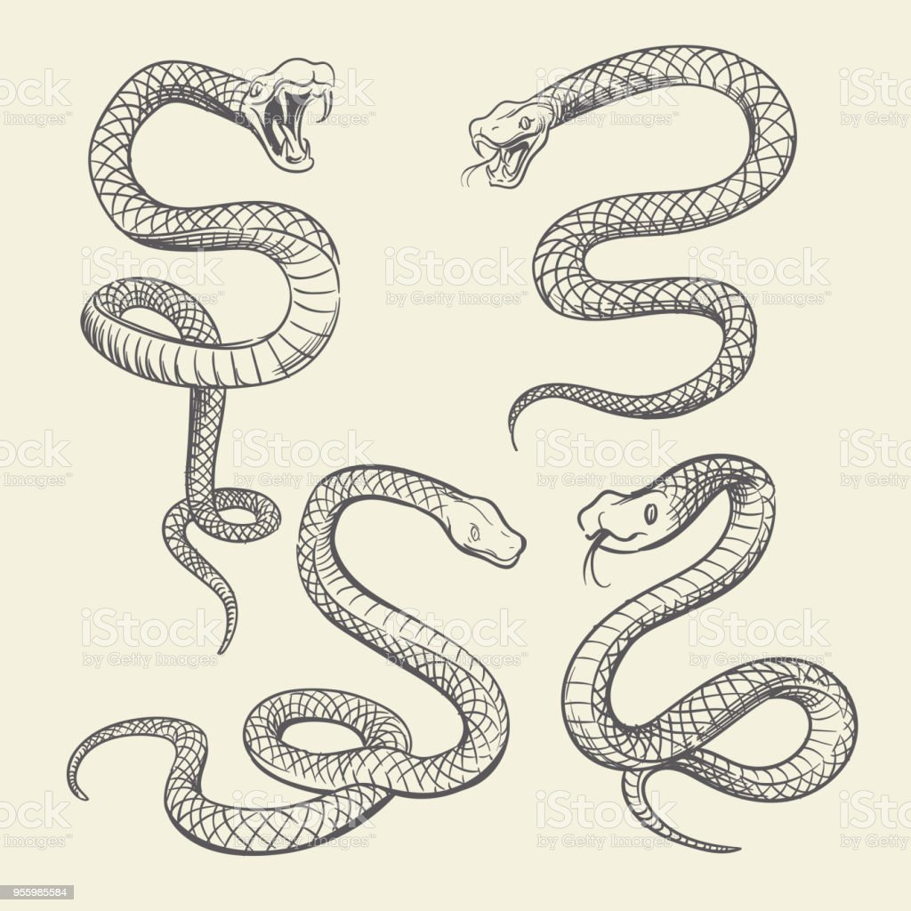 It's just a graphic of Astounding Snake Skin Drawing