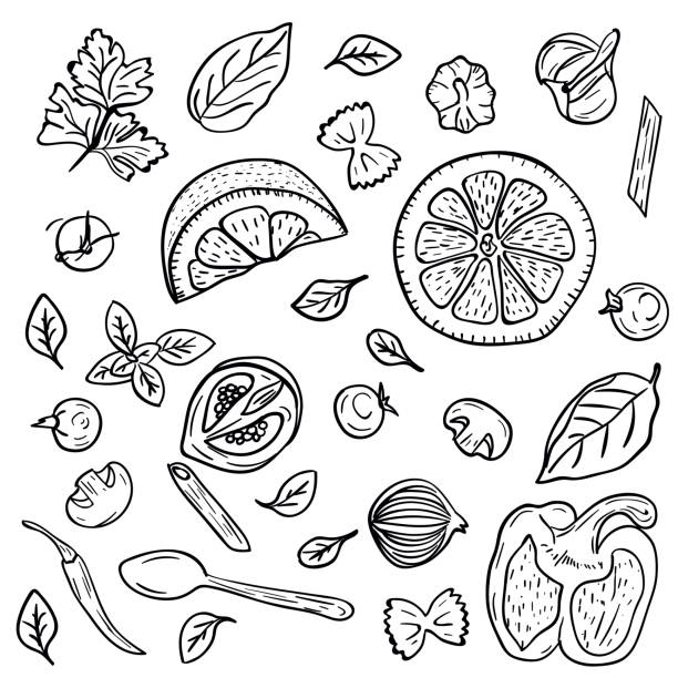 Hand drawing vegetables, herbs, spices for pasta in doodle style on white background. Doodle drawing vegetable and food ingredients. Italian cuisine. Food and dieting concept Hand drawing vegetables, herbs, spices for pasta in doodle style on white background. Doodle drawing vegetable and food ingredients. Italian cuisine. Food and dieting concept basil stock illustrations