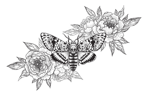 Hand drawn Acherontia Styx butterfly and Peony flowers