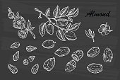 Hand drawn Almonds set: Branches with leaves and immature fruit. Blossoming almond. Nuts and kernels. Vector illustration