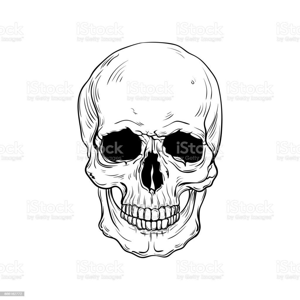 Hand Gezeichnet Anatomie Schädel Vektor Stock Vektor Art und mehr ...