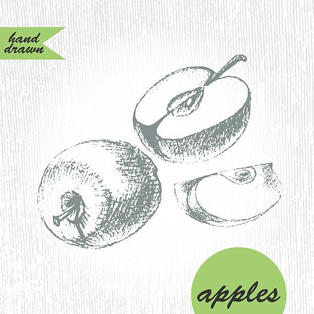 Handgezeichnet apple, die Hälfte mit Scheibe Skizze in Grau – Vektorgrafik